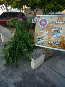 Foto: Cipe-Chapda