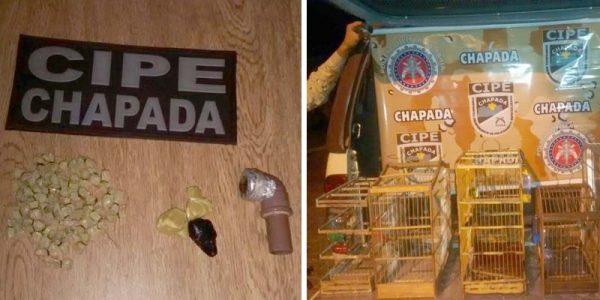 Além da droga, foram apreendidos cinco pássaros silvestres | FOTO: Montagem do JC/Cipe-Chapada |