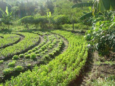 A formação acontece entre os dias 9 e 11 de dezembro, na Fazenda Curió, na Vila da Lagoa | FOTO: Reprodução/Sistema Harpia |
